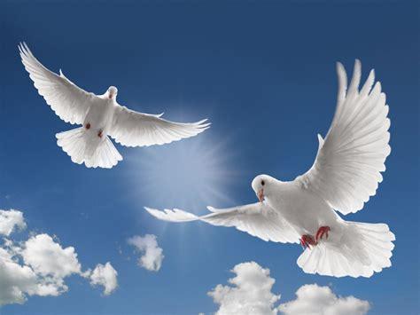 white dove new calendar template site