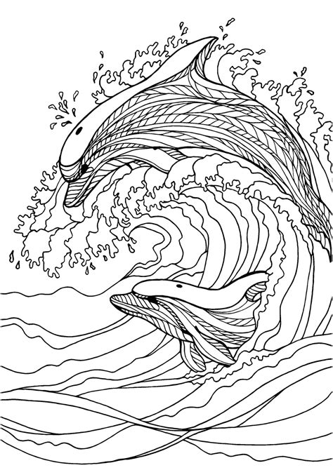 coloring pages for adults dolphins dolphin adult colouring page colouring in sheets art