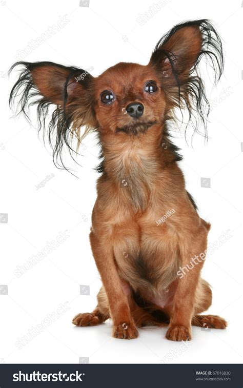 pics of long hair dark browm terriers online image photo editor shutterstock editor