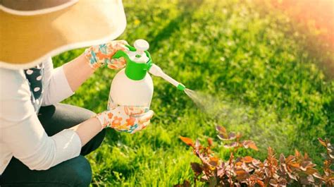 organic pesticides   healthy garden life  organic