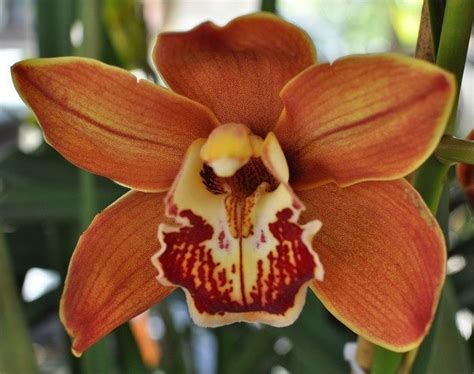 silent sunday from the land of pink claire k creations silent sunday gorgeous orchids at the noosa farmers