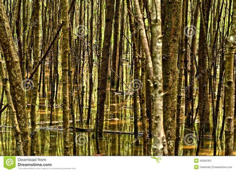 texture pattern forest forest abstract mangrove forest stock photo image 40084361