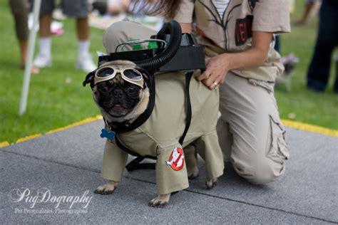 pug bee costume pugtoberfest 2008 costume contest pugdography