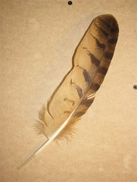 owl feather tattoo owl feather journeys
