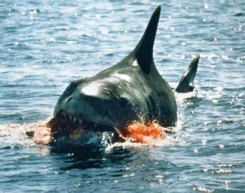 jaws biography channel documentary the inside story documentary what happens next on the