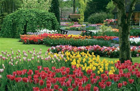 fiori olanda olanda esplosione floreale a keukenhof vivereinviaggio