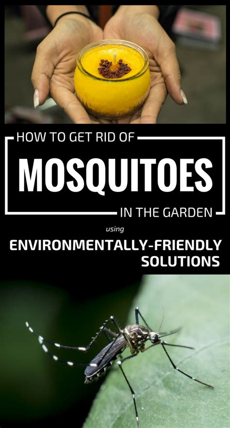 how to rid backyard of mosquitoes how to get rid of mosquitoes in the garden using