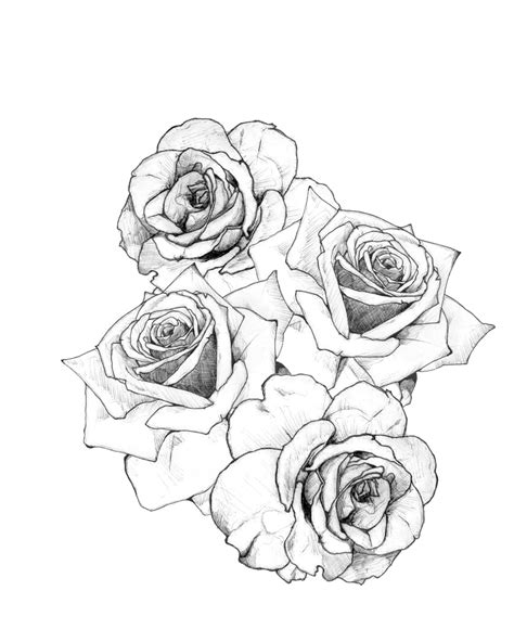 sketched floral coloring tumblr coloring pages