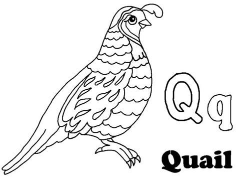 quail coloring pages only coloring pages