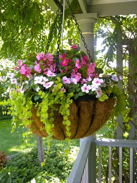 Hanging Basket Of Impatiens Begonias And Lychamachia Hanging Flower Garden