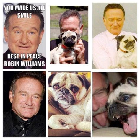 robin williams pug 17 best images about pug on pug meme puppys and images of animals