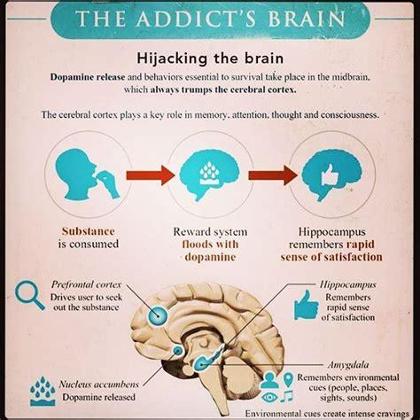 Detox The Cortex by Best 25 Amygdala Hijack Ideas On Neuroscience