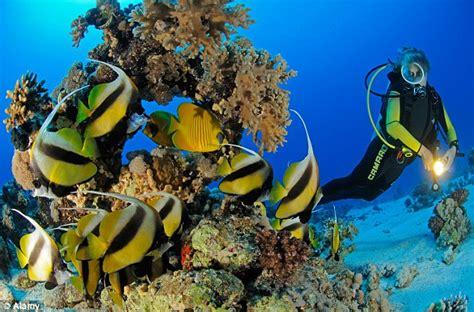 dive sea sea diving adventure
