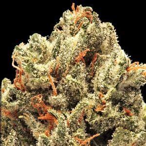 Best Thc Detox Reddit by Skittles Marijuana Strain Pictures The