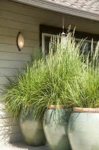 plant lemon grass in big pots for the patio how do it