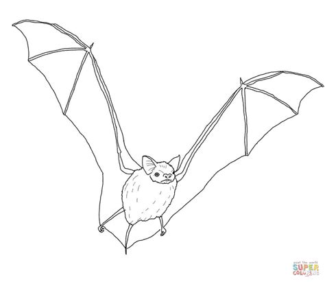 simple bat coloring page big brown bat coloring page free printable coloring pages