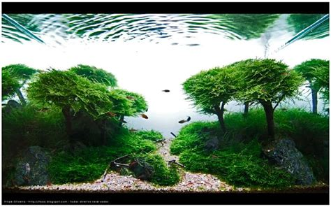 cool aquascapes takashi amano aquarium pinterest aquarium bonsai