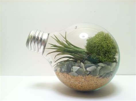 Light Bulb Terrarium light bulb terrarium large globe