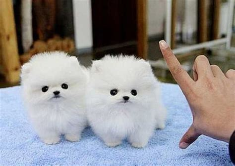 Make Your Day Cutest Pets by These Puppies Will Melt Your Babamail