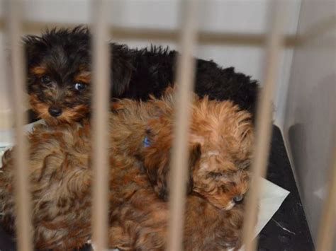 puppy stores nj several n j pet stores buying from inhumane puppy mills scathing report reveals