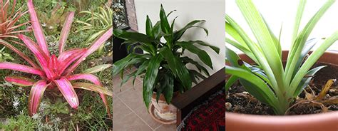 best houseplants these are the best houseplants to improve indoor air