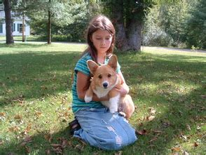 corgi puppies michigan dekunst pembroke corgi about us corgi puppies for sale michigan monte