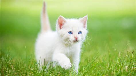 theme names for litter of kittens divided cat rp based on warrior series members