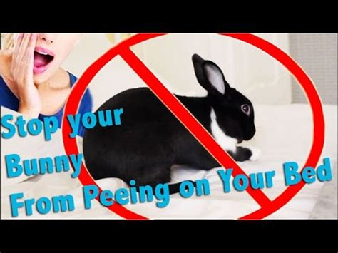 how to stop peeing the bed how to stop your bunny from peeing on your bed youtube