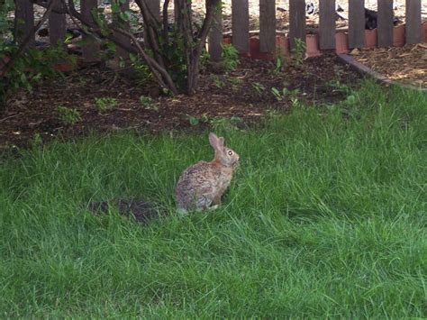 backyard wildlife sanctuary chronicles of a clueless mom backyard wildlife sanctuary