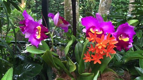 new years botanical gardens singapore botanic gardens lunar new year 2015 at