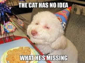 Stoner Dog Meme - stoner dogs 20 hilarious pics of the newest meme based