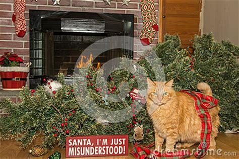 cats knocking over christmas trees cat destroys stock photo image 65994387