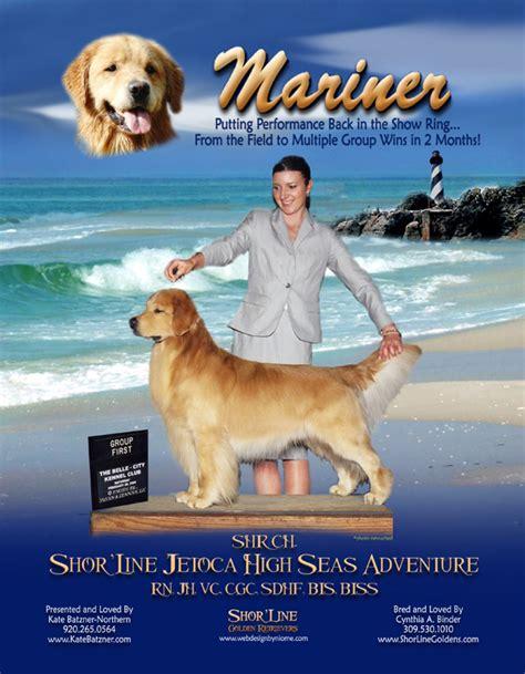 mariner golden retrievers shor line golden retrievers bis biss shr am can gch shor line jetoca high seas