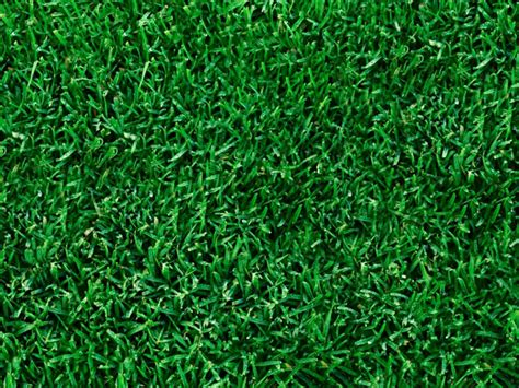type of grass for garden reubens lawn care the different seasons of lawn grass