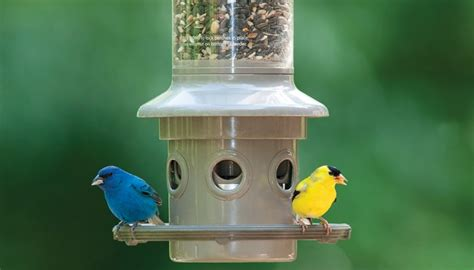 on guard cage wild birds unlimited wild birds unlimited