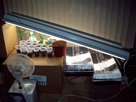 fluorescent light for seedlings how to grow tomatoes successfully indoors