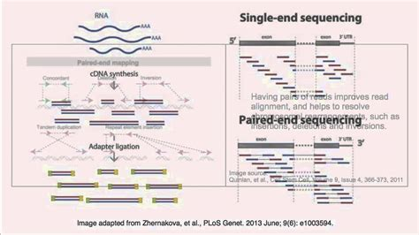 illumina sequencing animation paired end vs single end sequencing reads