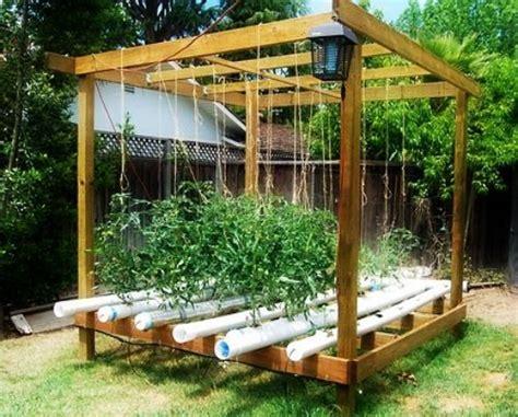 basics  hydroponic gardening
