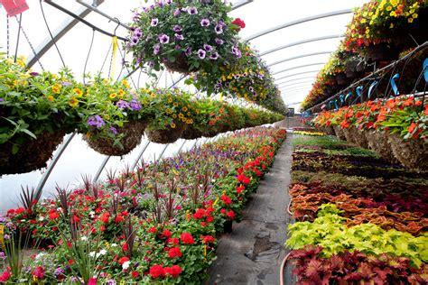where to buy plants in kolkata best nurseries in kolkata