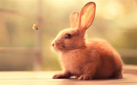 cute rabbit hd wallpaper rabbit hd wallpapers rabbit hd pictures free download