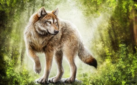 wolf gray paint gray wolf painting wallpaper