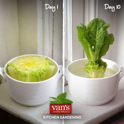 7 vegetables that easily regrow themselves 50 best images about gardening goodness on