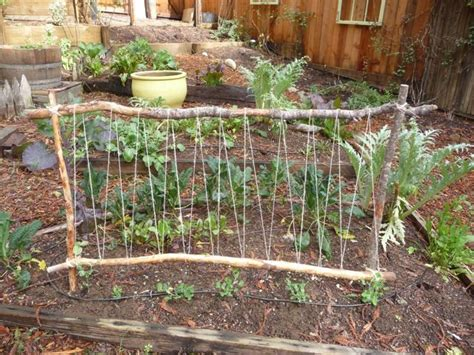 Pea Trellis Best 25 Pea Trellis Ideas On