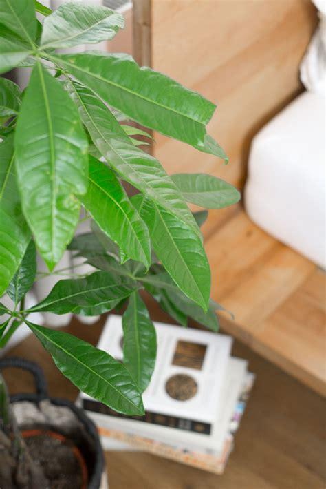 zimmerpflanzen schlafzimmer zimmerpflanzen im schlafzimmer garten fr 228 ulein
