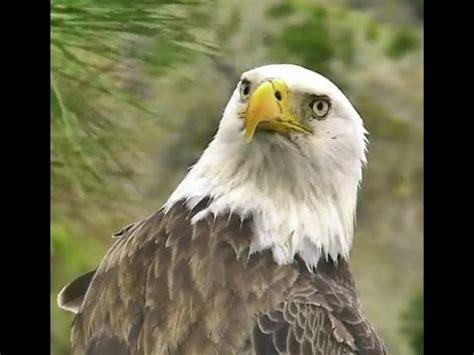 aef nefl eagles 2 24 15 nick enjoys fast food youtube