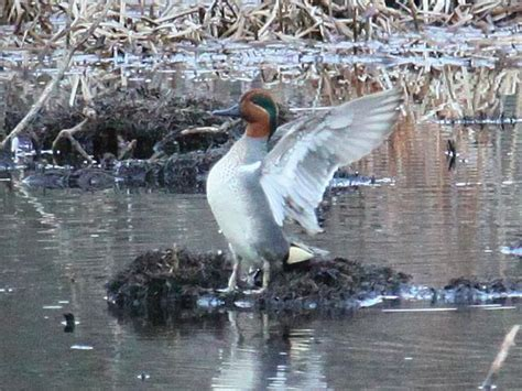Pantry Brook Wildlife Management Area by Green Winged Teal Sudbury Valley Trustees