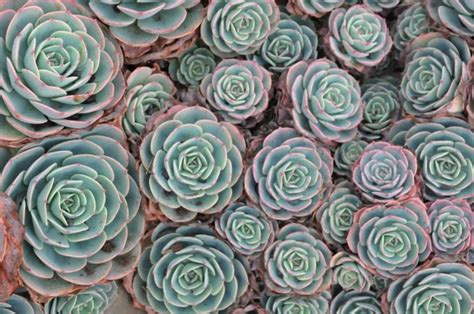 top groundcover plants landscaping home wizards