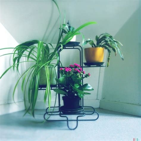 indoor plant display indoor plant display styled canvas blog pinterest
