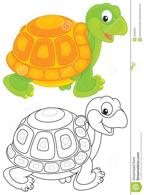 turtle stock image image 32032251