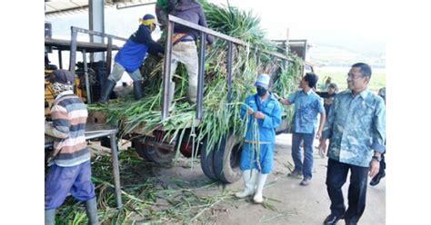 Polybag Bibit Tanaman 35 X 35 1 Kg jual bibit rumput gajah odot